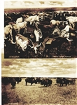Wonderful Sepia Toned Western Images - Texas Longhorns